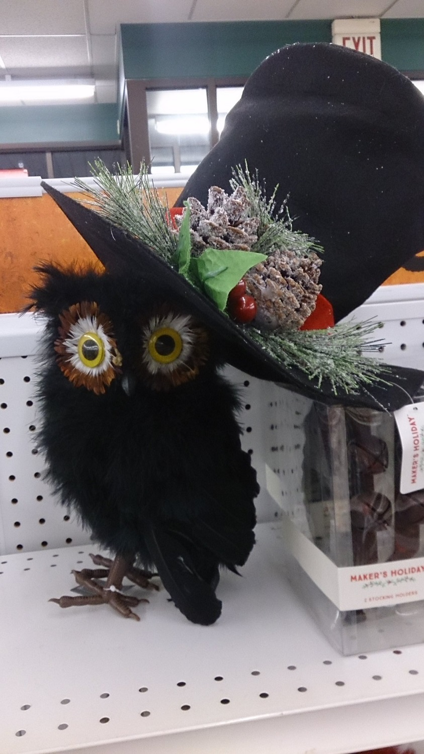 Owl Wearing Hat